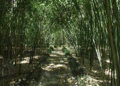 Kanapaha Botanical Gardens - Attraction - 4700 SW 58th Dr, Gainesville, FL, 32608, United States