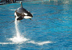 Sea World - Amusement Parks - Sea World, San Diego, CA, US