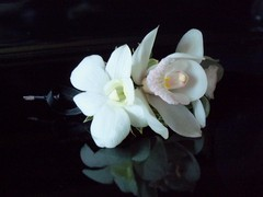 White Orchid Wedding Ceremonies - Officiant - 2276 Sheffield Drive, Burlington, Ontario, L7P 2X3, Canada