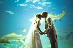 NC Aquarium on Roanoke Island - Ceremony &amp; Reception, Rehearsal Lunch/Dinner, Reception Sites - 374 Airport Road, Manteo, NC, 27954, USA