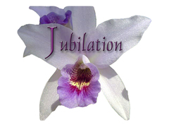 Jubilation - Coordinators/Planners - Private Residence, Mt. Pleasant, SC, 29464, United States