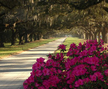 Boone Hall Plantation - Ceremony & Reception, Rehearsal Lunch/Dinner, Reception Sites - 1235 Long Point Road, Mt. Pleasant, South Carolina, 29464, United States