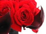 Ever After Floral Design - Florists, Decorations - 1570 W 31st Pl #7, Hialeah, FL, 33012, USA