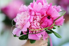 Shelly's Designs Florist - Florists, Invitations - 2403 Nolan Ave. NW, Grand Rapids, MI, 49534, US