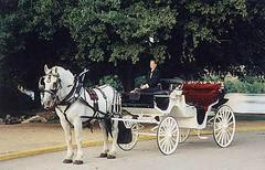 Austin Carriage - Limos/Shuttles - 96 Red River, Austin, Texas, 78701, USA