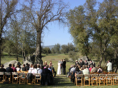 Ginny and Nick 's Wedding in Fish Camp, CA, USA
