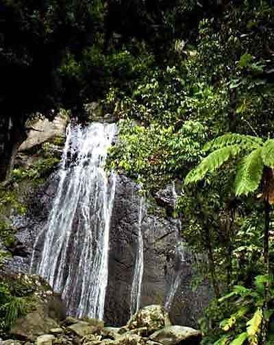 El Yunque National Forest - Attractions/Entertainment - Carretera 191, Mameyes II, Puerto Rico, PR