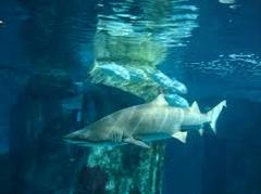 North Carolina Aquarium - Things to do - 374 Airport Rd, Manteo, NC, United States