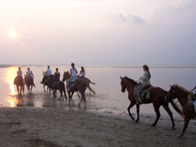 Horseback Riding - Things to do - Cedar Island, NC