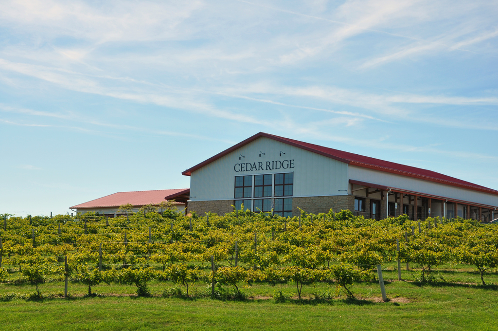 Cedar Ridge Vineyard - Ceremony Sites - 1441 Marak Rd NW, Swisher, IA, 52338