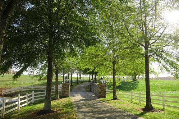Adaumont Farm - Ceremony Sites, Reception Sites, Ceremony & Reception - 4941 Finch Farm Rd, Trinity, NC, 27370, US