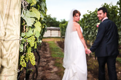 Truro Vineyards of Cape Cod - Reception - 11 Shore Rd, Truro, MA, 02652, US