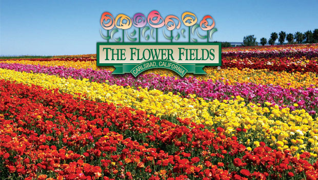 The Flower Fields - Attractions/Entertainment, Parks/Recreation, Ceremony Sites, Reception Sites - 5704 Paseo Del Norte, Carlsbad, CA, United States