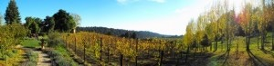 Soquel Vineyards - Rehearsal Lunch/Dinner, Attractions/Entertainment, Wineries - 8063 Glen Haven Rd, Soquel, CA, 95073, US