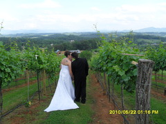 fontaine vineyard - Ceremony Sites, Cakes/Candies, Ceremony & Reception - Mount Airy rd./ Hallaran drive, Leicester, NC, 28748, USA