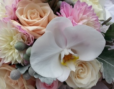 Dees Florals - Florists, Decorations - Mars, PA, 16046, USA