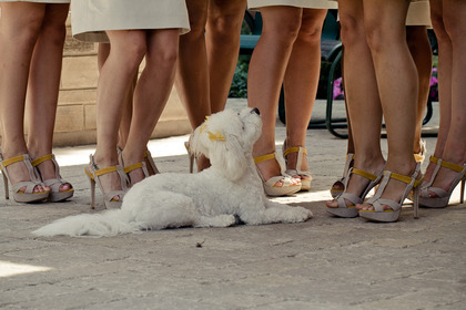 Check out their shoes!  Grey and yellow to match our colors. Wedding Party Attire - Michelle and Martin's Wedding in Milton, ON, Canada